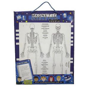 New Dimension -  Human Skeleton Magnetic Board